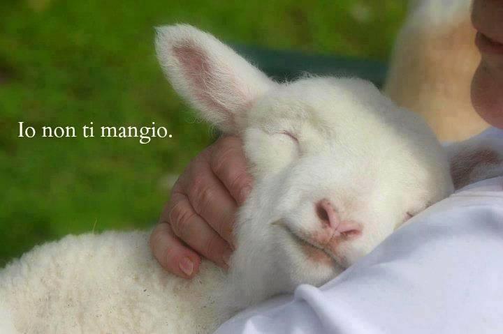 menu-vegan-pasqua-cruelty-free